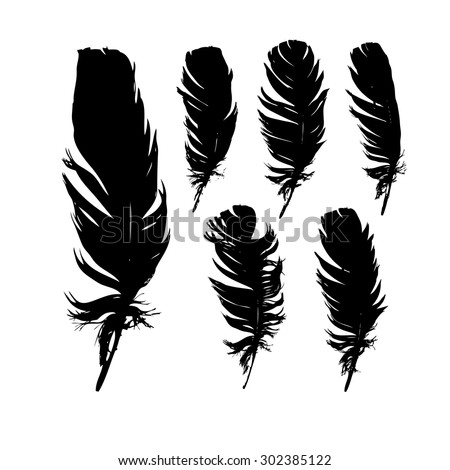 Set feathers. Vector - stock vector
