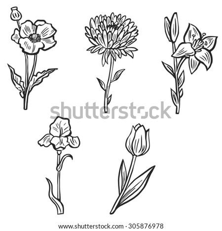 Set flower plant black white stock vector 305876978 shutterstock set flower plant black and white mightylinksfo