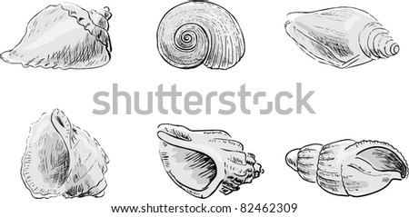 Set From Cockleshells - stock vector