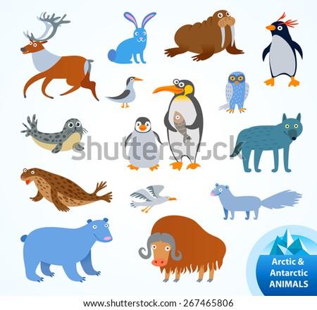 Set funny Arctic and Antarctic animals. Penguin, polar bear, seal, walrus, arctic fox, musk-ox, hare, reindeer, wolf, snowy owl, albatross, arctic tern. Funny cartoon character. Vector illustration - stock vector