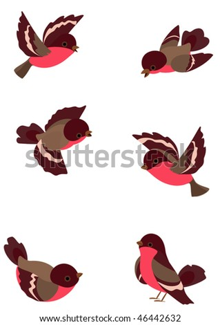 Set funny robin birds, vector illustration, object isolated