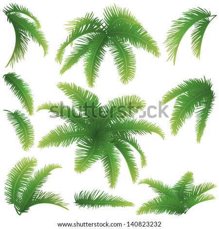 Set green branches with leaves of palm trees on a white background. Drawn from life. Vector - stock vector