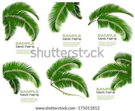 Set green branches with leaves of palm trees. Vector.  - stock vector