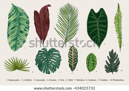 Set Leaf. Exotics. Vintage vector botanical illustration. Colorful. - stock vector