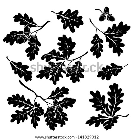 Set oak branches with leaves and acorns, black silhouettes on white background. Vector - stock vector