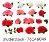 Set of a beautiful roses on a white background. Vector. - stock photo