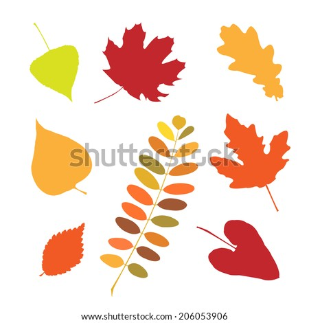 Set of a different autumn leaves - stock vector