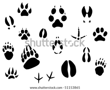 Set of animal footprints for ecology design. Jpeg version also available in gallery - stock vector