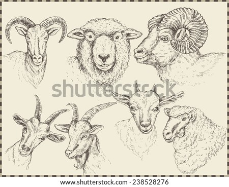 set of animals, sheep, goats. Symbol year - stock vector