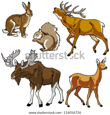 set of animals,wild beasts,forest fauna,vector images isolated on white background,Eurasia herbivore mammals - stock vector