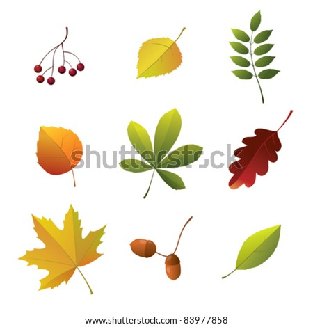 Set of autumn details - stock vector