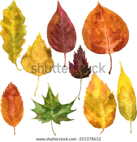 set of autumn leaves drawing by watercolor, hand drawn vector elements - stock vector