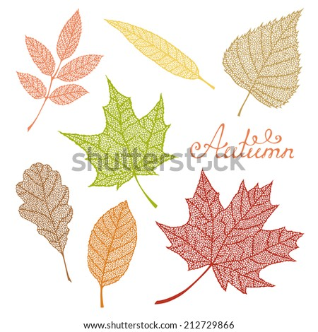 Set of autumn leaves. Hand-drawn vector elements for your autumn design.  - stock vector