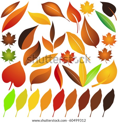Set of Autumn leaves vector - stock vector