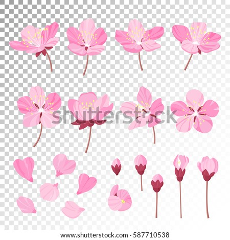 Set Of Beautiful Cherry Tree Flowers Isolated On Transparent Background Collection Pink Sakura Or