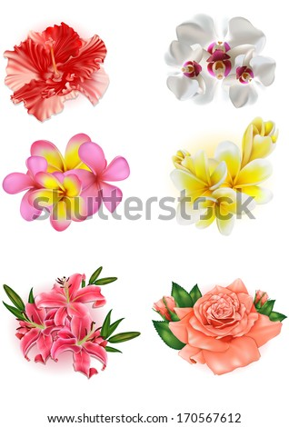 set of beautiful flowers: lily, rose, hibiscus, orchid, plumeria - stock vector