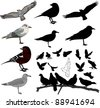 Set of birds and silhouettes of birds - stock vector