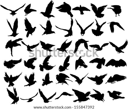 Set of 42 birds and silhouettes of birds - stock vector