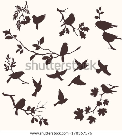 Set of birds and twigs.  Decorative silhouettes of  birds and tree branches: oak, maple, birch, rowan and others - stock vector