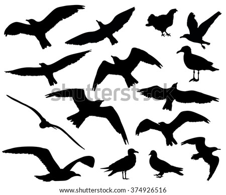 Set of birds silhouettes 15 in 1 on white background. Vector illustration - stock vector