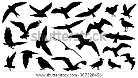 Set of birds silhouettes 23 in 1 on white background. Vector illustration - stock vector