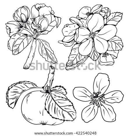 Set Of Blossom Apple Tree Branches And Flower Hand Drawn Fruit