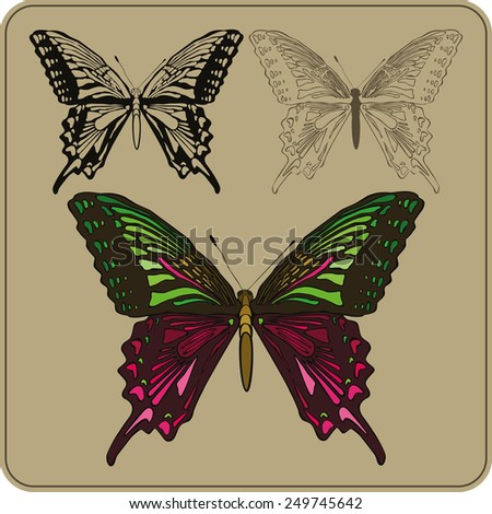 Set of butterflies, hand-drawing. Vector illustration - stock vector