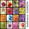 set of 16 cards with colored blossoming flowers - stock photo