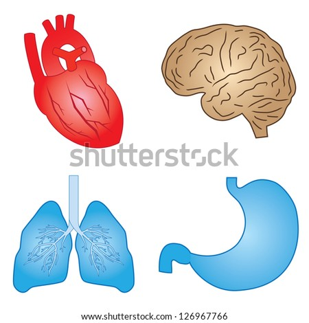 Set of cartoon images of human organs on the white background. - stock vector
