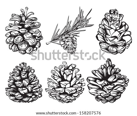 set of christmas hand drawn pine cones - stock vector