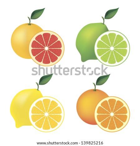 Set of citrus fruit � grapefruit, lime, lemon and orange - stock vector