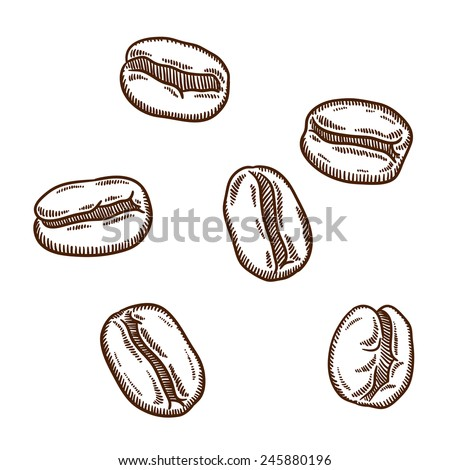 Set of coffee beans. Retro style. Outline. Isolated on whit background. - stock vector