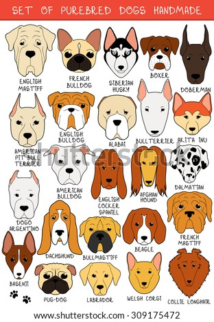 Set of 24 colored dogs different breeds handmade. Head dog. Icons with dogs. Sketch of animals. Doodle Dog. Set of isolated dogs for design. Dogs handmade. Alabai and Mastiff. Bulldog and pug. Pitbull - stock vector