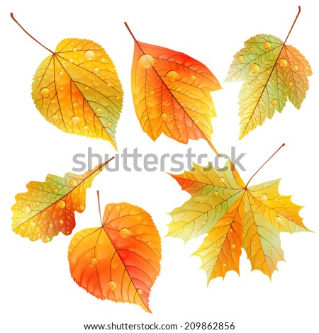Set of colorful autumn leaves. EPS10 - stock vector