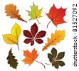 Set of colorful autumn leaves for your design, vector illustration. Raster version available in my portfolio - stock photo