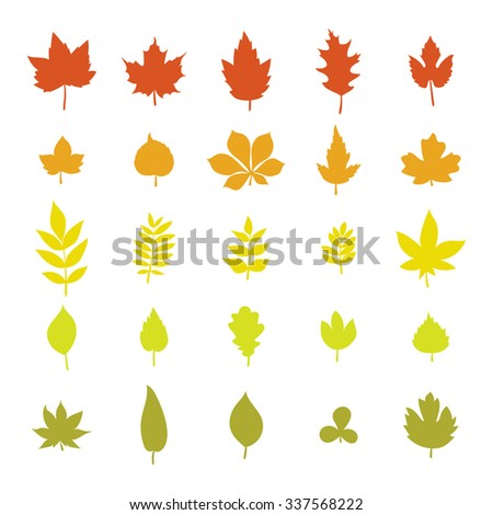 Set of colorful autumn leaves. Leaf collection isolated on white background. Vector illustration - stock vector