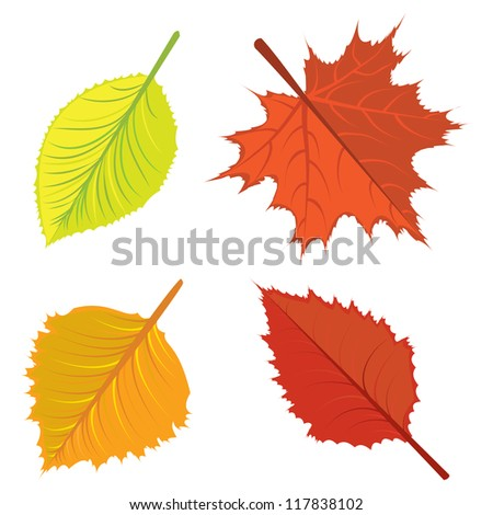 Set of colorful bright autumn leaves on white background. - stock vector