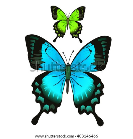 Set of colorful butterflies Papilio ulysses and machaon. Vector illustration. - stock vector