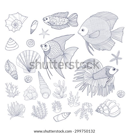 Set of cute hand drawn contour fish, shells and algae. Vector - stock vector