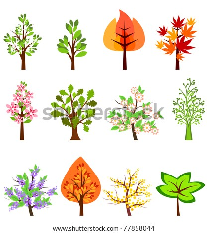 Set of different beautiful trees isolated on white