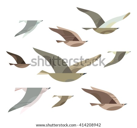 Set of different flying birds. Vector illustration