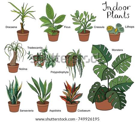 Set different indoor plants eith decorative stock vector for No maintenance indoor plants
