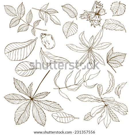 Set of different nuts leaves, hand drawn - stock vector