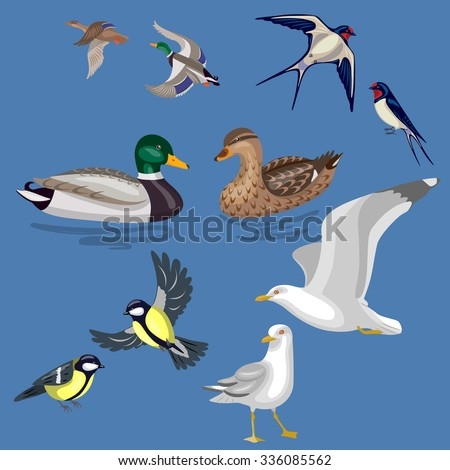 Set of different pairs of wild birds isolated on blue background. Simplified images of waterfowl and migratory songbirds. - stock vector