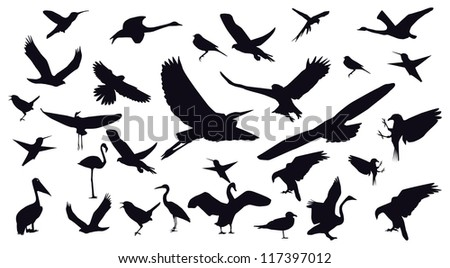 Set of different photographs of birds isolated on white background. - stock vector