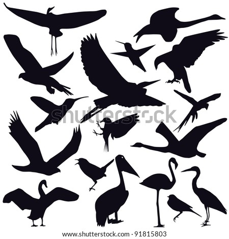 Set of different photographs of birds isolated on white background - stock vector