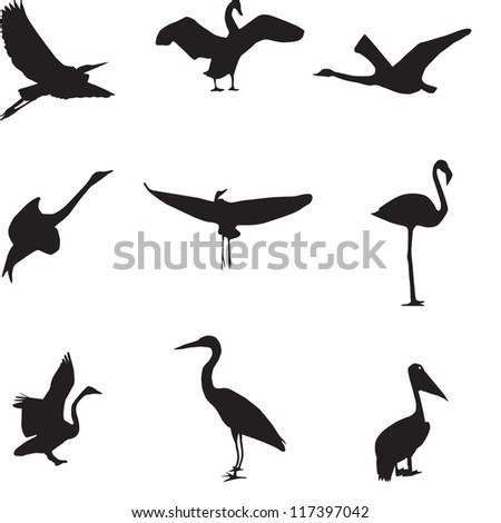 Set of different photographs of birds seamless pattern. Vector illustration. EPS 10 - stock vector