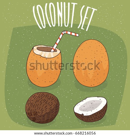 Set of different types of isolated coconuts, Orange Royal Coconut and fruit of coconut palm, whole and nicely split. Visible flesh. Straw in coconut milk. Vector illustration