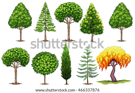 Set of different types of trees illustration