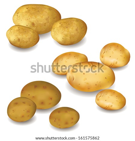 Set of different vegetables potatoes isolated on white background. Autumn harvest. Vector illustration - stock vector